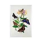 Butterflies and Honeysu Rectangle Magnet (10 pack)