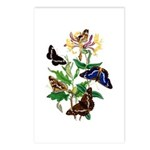 Butterflies and Honeysuck Postcards (Package of 8)