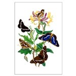 Butterflies and Honeysuckle Large Poster