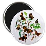 Butterflies of Summer Magnet