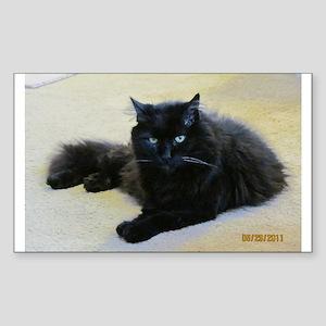 Black cat Sticker (Rectangle)