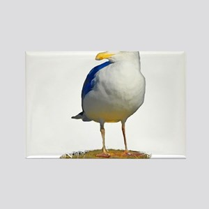 Sea Gull Has His Eye on You Rectangle Magnet