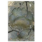 Black Bear Track Large Poster