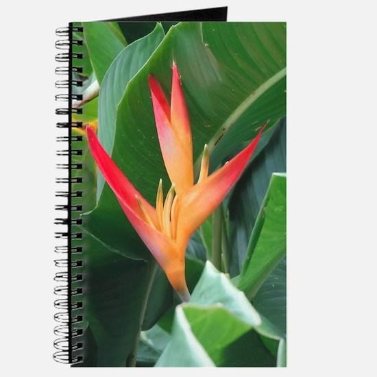 Bird of Paradise - Journal