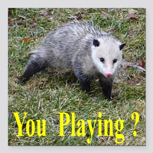 "Playing Possum Square Car Magnet 3"" x 3"""