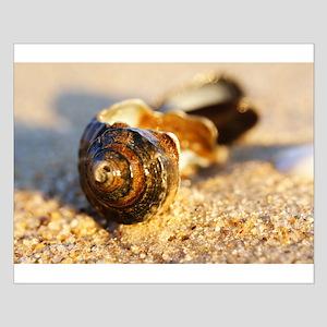 Sea Shell Small Poster