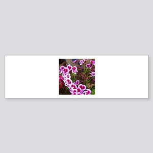 Geranium_RegalMiniPink1 Sticker (Bumper)