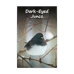 Dark-Eyed Junco Watercolor Mini Poster Print