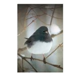 Dark-Eyed Junco Watercolo Postcards (Package of 8)