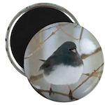 Dark-Eyed Junco Watercolor Magnet
