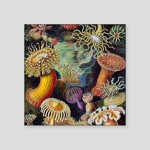 """Ernst Haeckel Sea Anemones Square Sticker 3"""" x 3"""""""