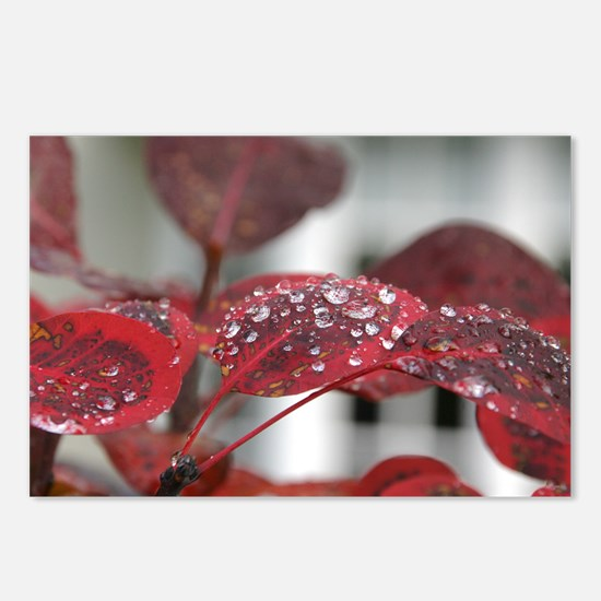 Dew on red leaves, Postcards (Package of 8)