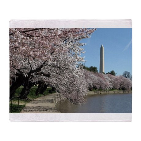 Peal bloom cherry blossom frames Washington Monum