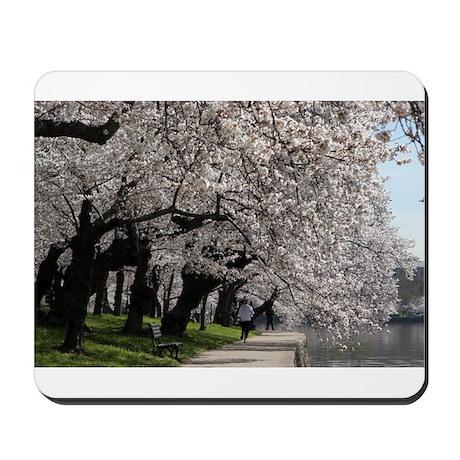 Cherry Blossom Peak Bloom Washington DC no-12