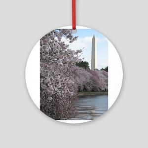 Peal bloom cherry blossom frames Washington Monume