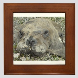 Walrus Head Framed Tile