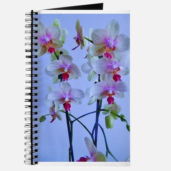 twin stems Journal