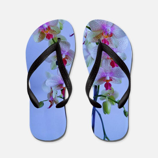 twin stems Flip Flops
