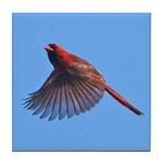 Flying Cardinal Tile Coaster