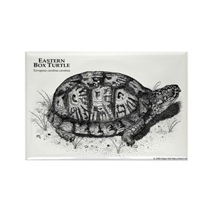 box turtle drawing magnets cafepress