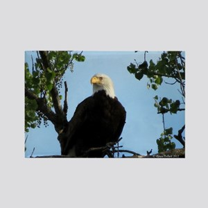 Bald Eagle in Tree with Sky Rectangle Magnet