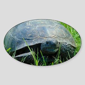Gopher Tortoise Sticker