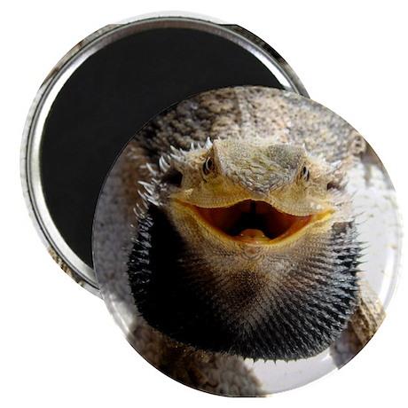"""Bearded Dragon 2.25"""" Magnet (10 pack)"""
