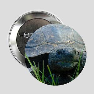 """Gopher Tortoise 2.25"""" Button"""