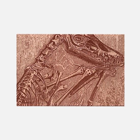 fossildino Rectangle Magnet