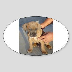 cane corso puppy second Sticker