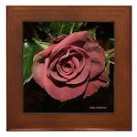 Castera Dusty Rose - Photograph Framed Tile