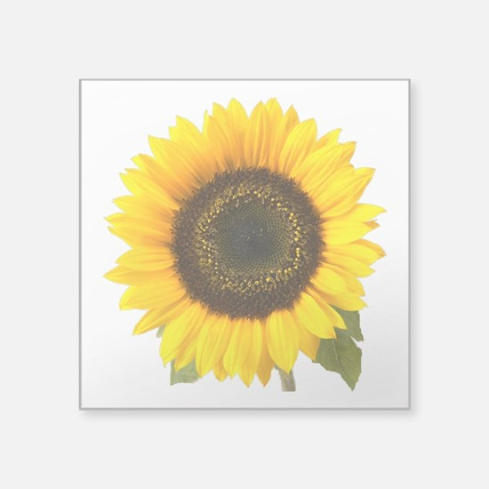 "Sunflower Square Sticker 3"" x 3"""