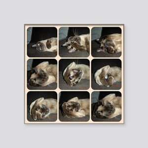 "Tonkinese Self Petting Square Sticker 3"" x 3"""