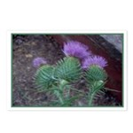 Thistle Trio Postcards (Package of 8)