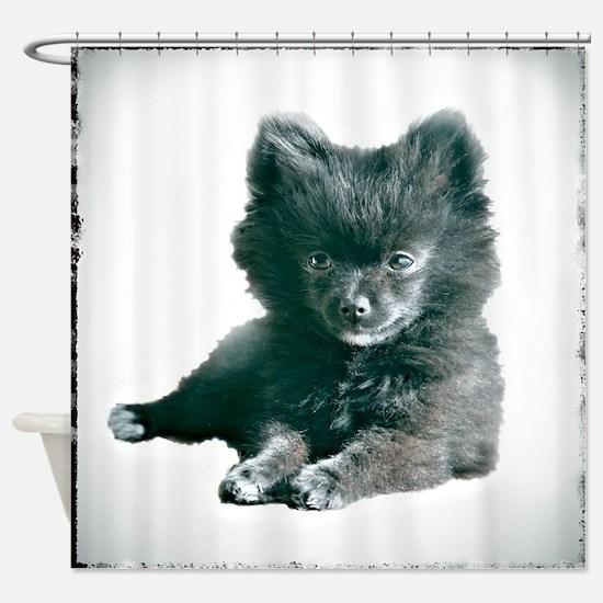 Adorable Black Pomeranian Puppy Shower Curtain