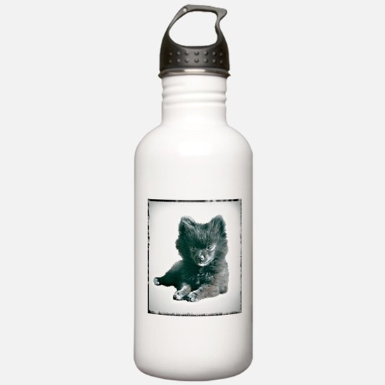 Adorable Black Pomeranian Puppy Water Bottle