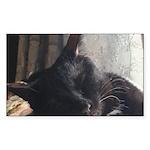 Sunny Siesta Sticker (Rectangle 50 pk)