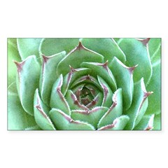 Succulent Sticker (Rectangle 50 pk)