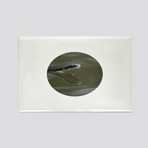 Water snake swimming with reflection Rectangle Mag