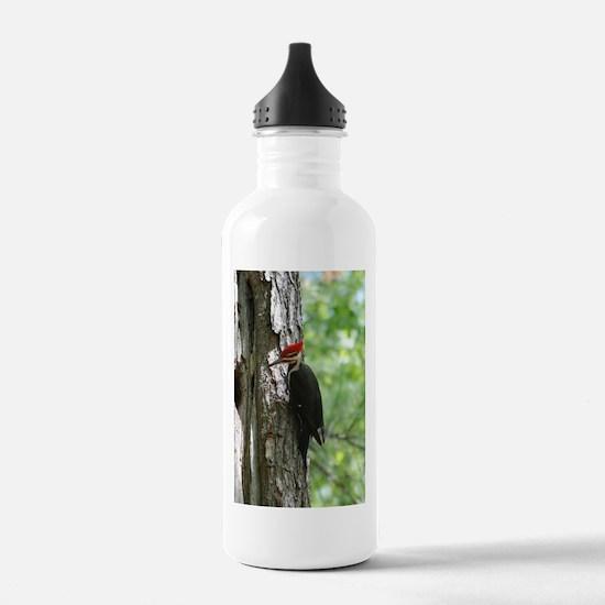 Pileated Woodpecker Water Bottle