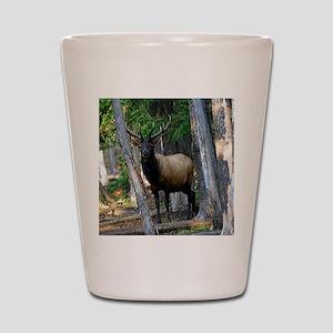 Elk in forest Shot Glass