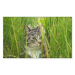 Stalking Kitty Sticker (Rectangle 10 pk)