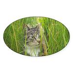 Stalking Kitty Sticker (Oval 50 pk)