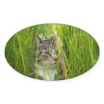 Stalking Kitty Sticker (Oval)