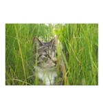Stalking Kitty Postcards (Package of 8)
