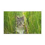 Stalking Kitty Rectangle Car Magnet
