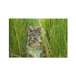 Stalking Kitty Rectangle Magnet