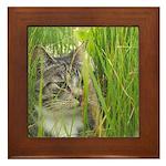 Peeking Cat Framed Tile