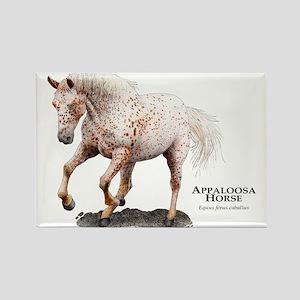 Appaloosa Horse Rectangle Magnet