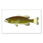 Smallmouth Bass Sticker (Rectangle 50 pk)